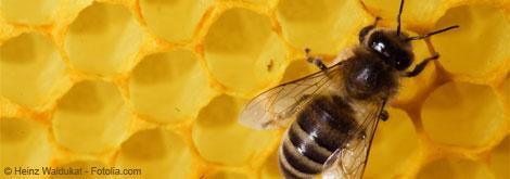 Apitherapie – Bienenprodukte im Einsatz in der Heilpraktiker-Praxis